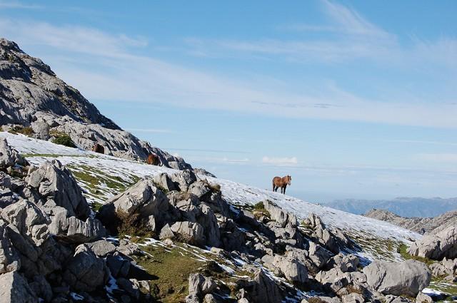 Turismo rural en cangas de on s asturias for Oficina turismo cangas de onis